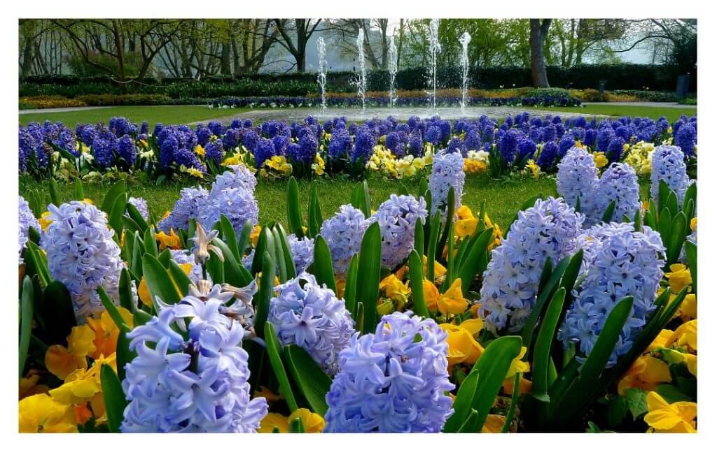 Frühlingsboten im Blumenhof, Foto: Heinz-Joachim Miserre